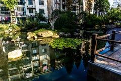 Agua Lily Pond 5 de Wuhu Anhui China imagen de archivo