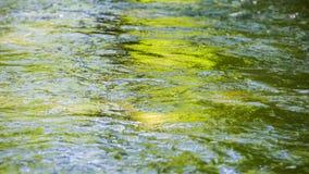 Agua ondulada de la corriente que se mueve lentamente en montañas