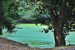 Agua pacífica del torquoise en Angkor Wat Foto de archivo