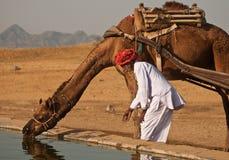 Agua para los camellos Fotos de archivo