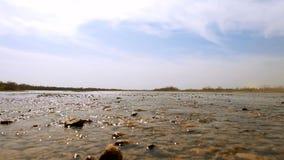 Agua poco profunda cerca de la orilla almacen de video