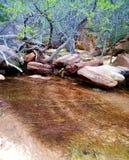 Agua poco profunda en parque nacional de zion Imágenes de archivo libres de regalías