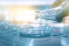 Agua poring de la mano del científico del frasco a la placa de Petri en médico Fotos de archivo