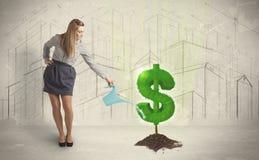 Agua poring de la mujer de negocios en muestra del árbol del dólar en backgrou de la ciudad Fotos de archivo