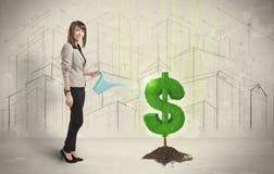 Agua poring de la mujer de negocios en muestra del árbol del dólar en backgrou de la ciudad Foto de archivo libre de regalías