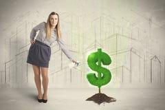 Agua poring de la mujer de negocios en muestra del árbol del dólar en backgrou de la ciudad Imagen de archivo
