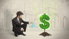 Agua poring del hombre de negocios en muestra del árbol del dólar en fondo de la ciudad Fotografía de archivo