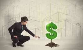 Agua poring del hombre de negocios en muestra del árbol del dólar en fondo de la ciudad Imagen de archivo