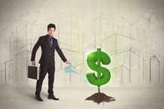 Agua poring del hombre de negocios en muestra del árbol del dólar en fondo de la ciudad Imagen de archivo libre de regalías