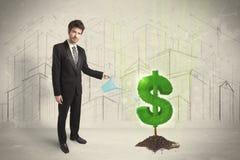 Agua poring del hombre de negocios en muestra del árbol del dólar en fondo de la ciudad Imágenes de archivo libres de regalías