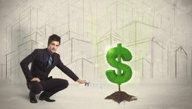Agua poring del hombre de negocios en muestra del árbol del dólar en fondo de la ciudad Imagenes de archivo