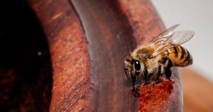 Agua potable de la abeja Imagen de archivo