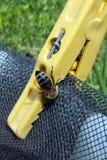Agua potable de la abeja Fotos de archivo