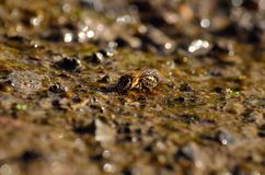 Agua potable de la abeja en el suelo Imágenes de archivo libres de regalías