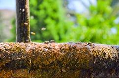 Agua potable de la abeja en una fuente Imagen de archivo libre de regalías
