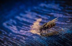 Agua potable de la mosca Fotos de archivo