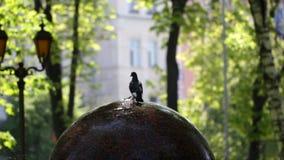 Agua potable de la paloma en la fuente en el parque