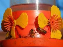 Agua potable de las abejas con el azúcar Imagen de archivo