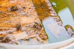 Agua potable de las abejas en el tablón de madera en el verano Fotografía de archivo libre de regalías