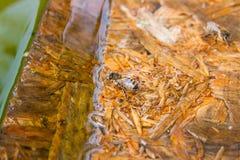 Agua potable de las abejas en el tablón de madera en el verano Imagen de archivo