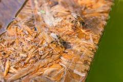 Agua potable de las abejas en el tablón de madera en el verano Fotos de archivo