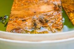 Agua potable de las abejas en el tablón de madera en el verano Imagen de archivo libre de regalías