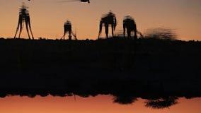 Agua potable de las jirafas en waterhole metrajes