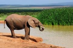 Agua potable del elefante en la presa de Harpoor Imágenes de archivo libres de regalías