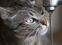 Agua potable del gato Fotos de archivo
