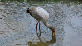 Agua potable del pájaro Fotos de archivo
