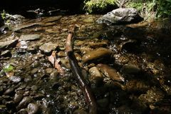 Agua potable en una corriente de la montaña Fotografía de archivo libre de regalías