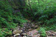 Agua pura de una búsqueda de la corriente de la montaña abajo al llano Fotografía de archivo libre de regalías