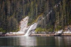Agua que atraviesa árboles de hoja perenne Foto de archivo libre de regalías