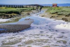 Agua que atraviesa los pantanos de la reserva de Don Edwards imagenes de archivo