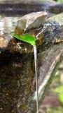 Agua que fluye de la hoja Fotografía de archivo