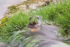 Agua que fluye sobre hierba Imagen de archivo libre de regalías
