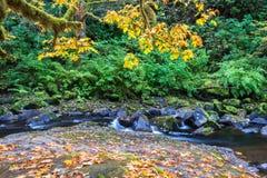 Agua que fluye sobre rocas en la cala enmarcada por Autumn Foliage Imágenes de archivo libres de regalías
