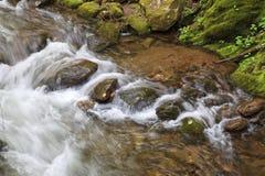 Agua que fluye sobre rocas en una cala de la montaña imagen de archivo