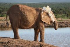 Agua que pinta (con vaporizador) del elefante imagen de archivo