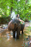 Agua que pinta (con vaporizador) del elefante a la mujer Fotografía de archivo