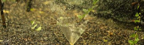 Agua que salpica principal de la pequeña irrigación del jardín imagenes de archivo