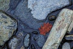 Agua, rocas del río con la hoja roja Fotos de archivo