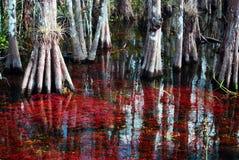 Agua roja Foto de archivo