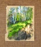 Agua rusa del paisaje de la primavera del bosque delgado alto del abedul blanco Fotos de archivo