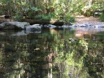 Agua serena hermosa con reflexiones de árboles circundantes Imagen de archivo