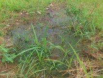 Agua subterránea Imagen de archivo