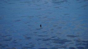 Agua tranquila del lago Imagenes de archivo