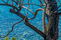 Agua transparente del mar adriático a través de un árbol viejo Imágenes de archivo libres de regalías