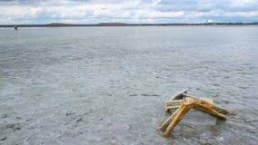 Agua transparente salada del mar muerto del lago de la sal salina de Salar almacen de video