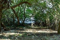 Agua a través de un manojo de árboles imagen de archivo